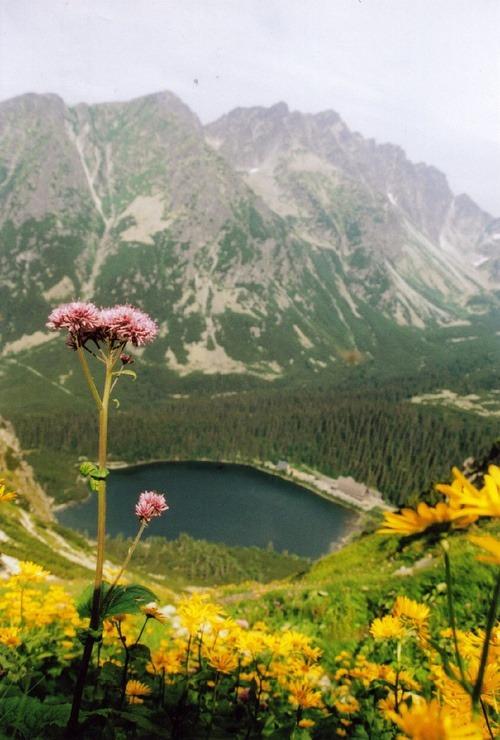 slovakia, wow!