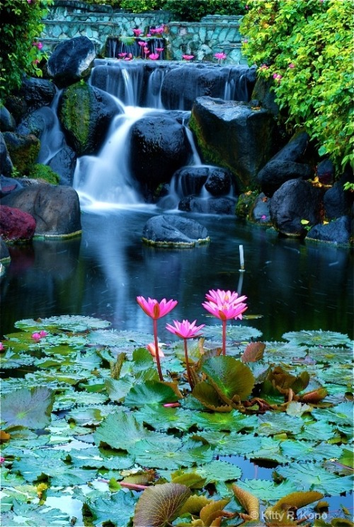 bluepueblo:  Lotus Blossom Waterfall, Bali photo via martina