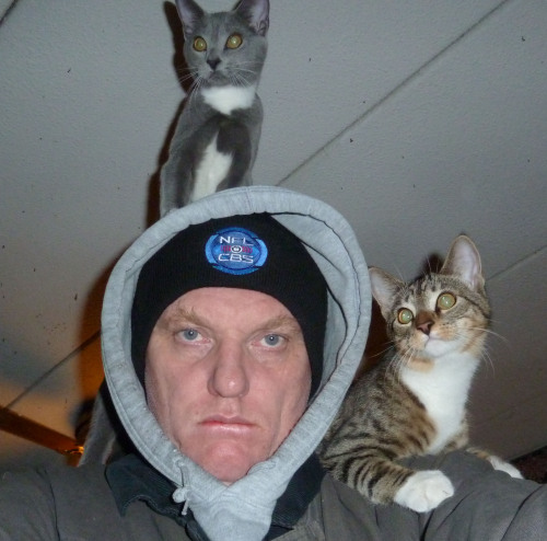 i appreciate your concern, cats, but i'm wearing enough layers already.