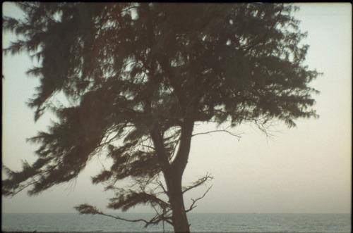 konophoto konophotography film 35mm analogue analog film photography thefilmcommunity nature sea india ishootfilm filmisnotdead 2017