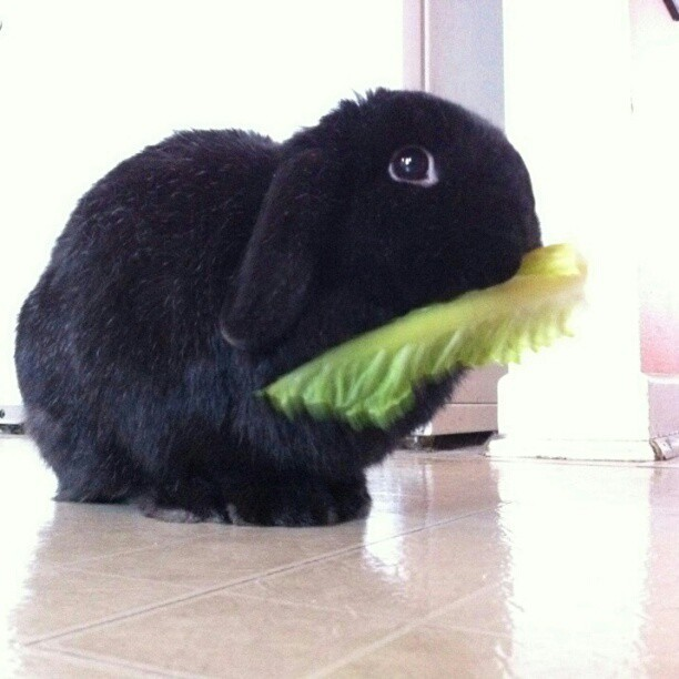 Friday Bunny is my bunny <3!