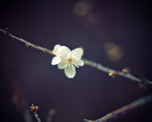 In these cold, dark places, I dream of Spring… Shot with my Pentax K1000, using Fuji Pro 400H.