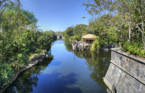 A quiet spot at Disney's Animal Kingdom (by Duane Matsen)