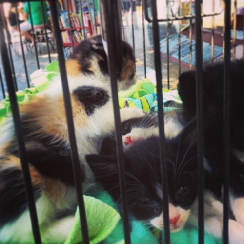 Kittens in a bird cage in Los Feliz. Part of an adorable adoption mission. Meow~