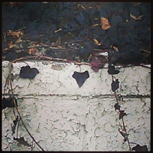 Tiny little heart shaped black leaf on the wall outside DD #socute #heart #black #nature