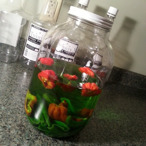 #spicy #pepper medly #infused #vodka with some #habaneros and serrano peppers