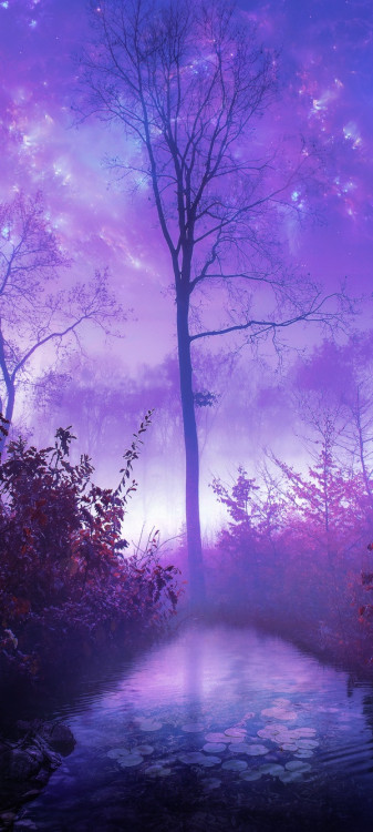 opticoverload:  Morning Mist