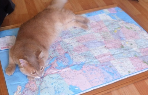 Reviving the travel blog for the upcoming road trip. Alfie, unfortunately, won't be joining us but he can help plan our route!