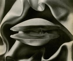 hoodoothatvoodoo:  Ruth Bernhard 'Clam' 1936  That is just gorgeous. And yummy.