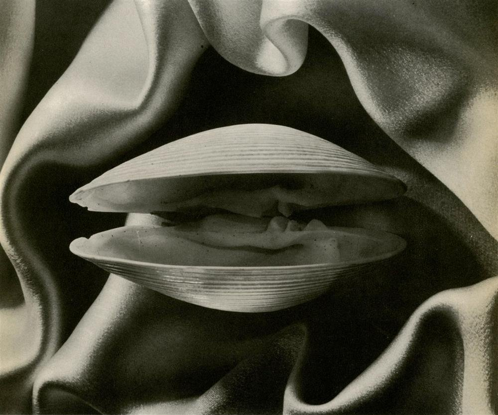 Clam, 1936Ruth Bernhard