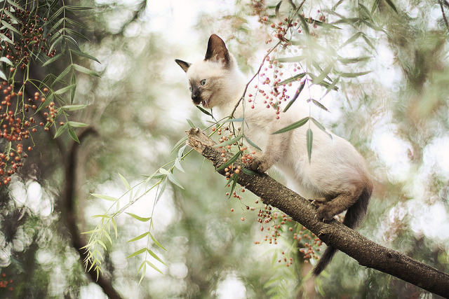 kitty in distress by AnnuskA  - AnnA Theodora on Flickr.