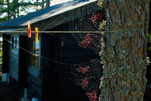 "Mended spiderwebs by Nina Katchadourian, as part of her ""Uninvited Collaborations with Nature""."