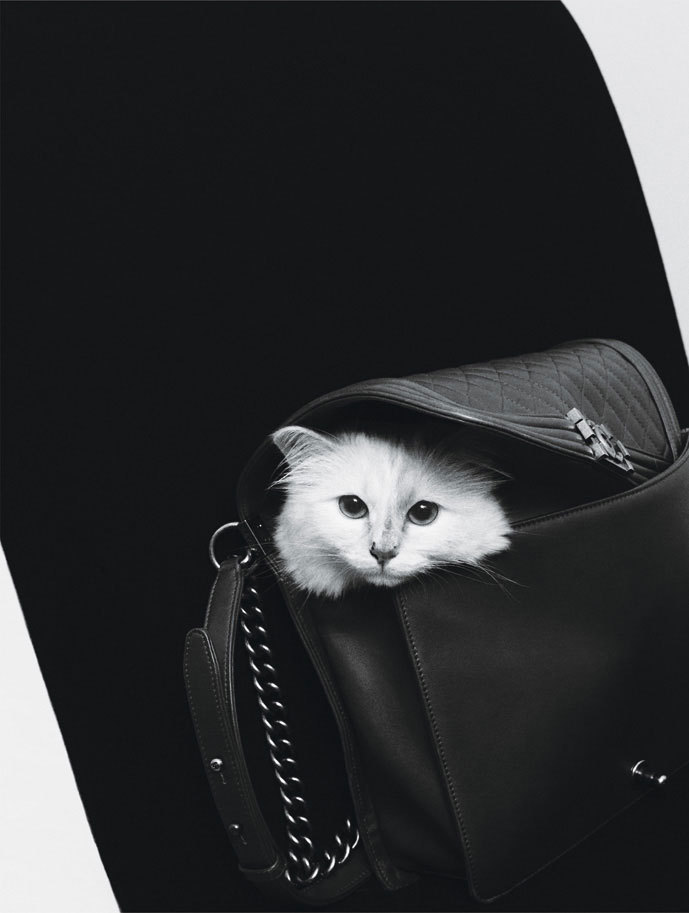 Cats By Karl Photograph by Karl Lagerfeld; W magazine September 2012.