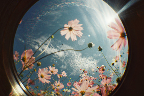 [M-45] Lomography Fisheye One by Maco@redyellowredyellowblack.sky on Flickr.