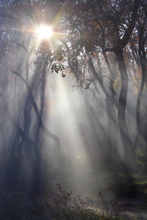 magicalnaturetour:  Enchanted Forest by Angelina Tarasenko