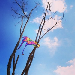 #sky #spring #kite #cloud #beijing