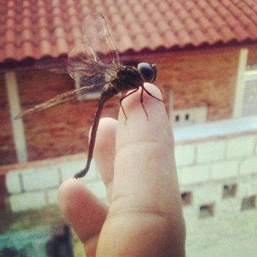 Dragonfly in my fingers! #dragonfly #fingers #buggingout #bug #nature #caracas #may #venezuela  (at Calle Oasis El Paraiso)