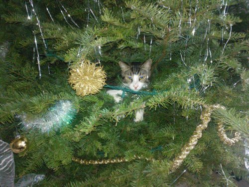 get out of there cat. you've already broken 4 different baubles. please don't break more.