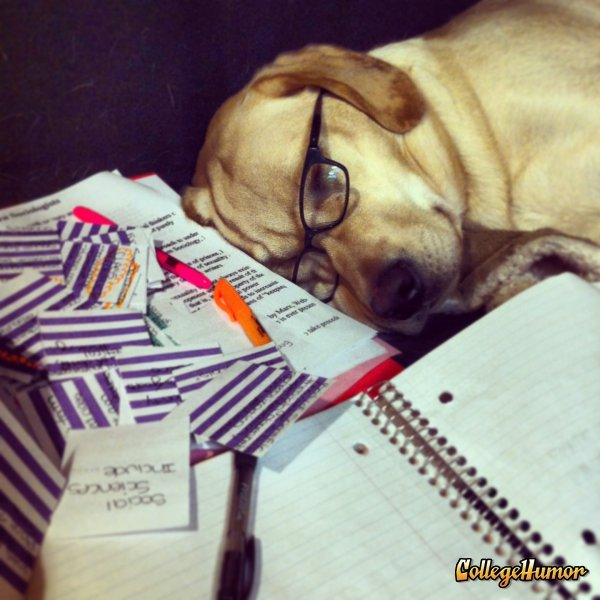 collegehumor:  Dog Student Studied Too Much Midterms are ruff.  Woof