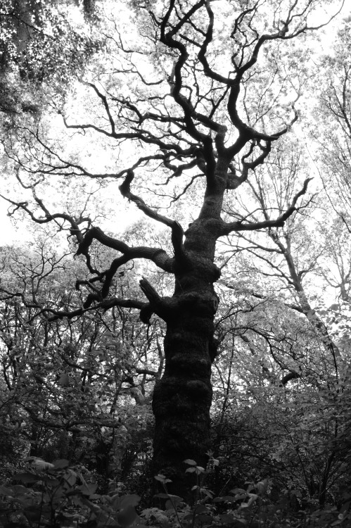 treeHampstead Heath, London