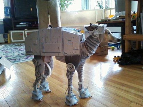 "xmjc:  septimalshenanigans:  I googled ""dog cosplay""…  Holy hell it's face!"