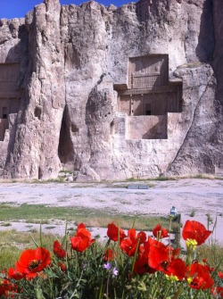 Naghsh-e Rostam Tombs, near Persepolis, Iran  Poppies adding a little colour beneath the monumental rockface.
