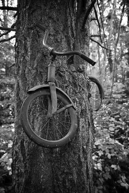 A boy left his bike chained to a tree when he went away to war in 1914. He never returned, leaving the tree no choice but to grow around the bike.(fromAmazing Things in the World)