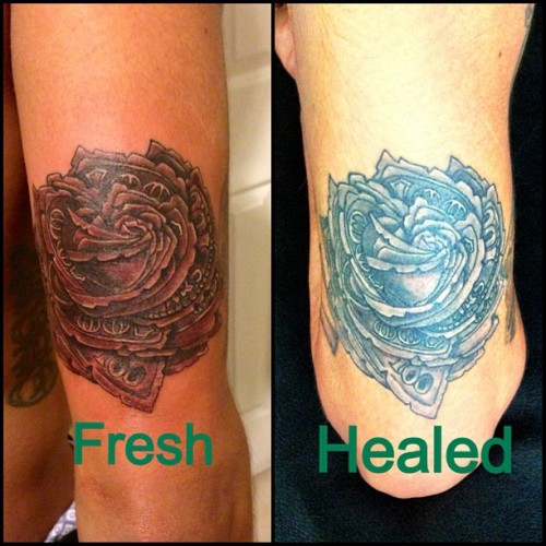 Juss got a healed pic of diz money rose I worked on a few months ago 😄💵🌹 left is the tattoo freshly done,& to the right is the tattoo fully healed 👽 #tattoo #tattoos #ink #art #healed #stylezink
