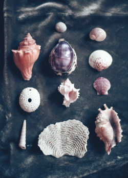 hawaiiancoconut:  Seashells from childhood.