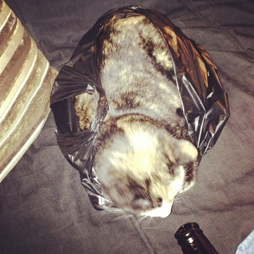 Bag cat wants to be the next big thing. #hashtagbagcat