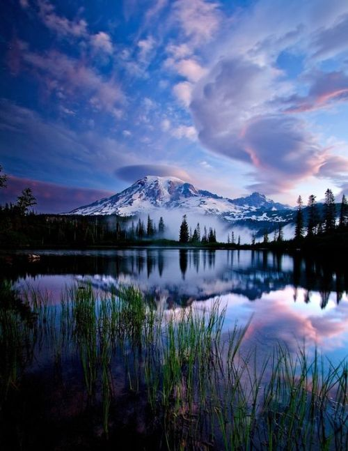 popelkuschristmas:  Rainier National Park (by unknown)