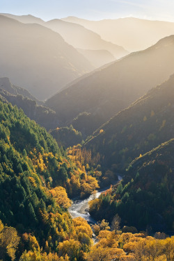 travelingcolors:  Arrow River Gold, Otago | New Zealand (by Paul Simpson.)