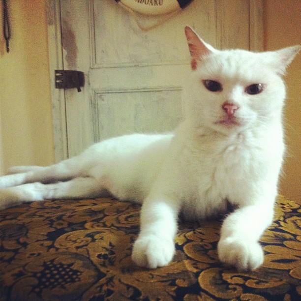 Neko, LOL. #snob #bitch #cat #neko #white #slut #queen #meow