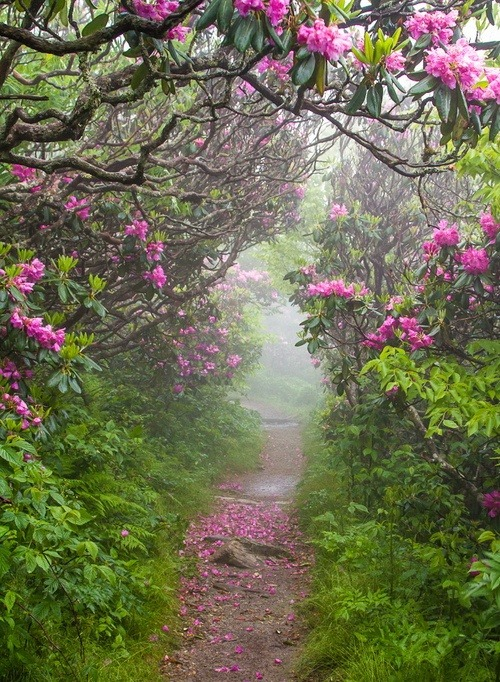 Spring, Craggy Garden, North Carolina photo via kris