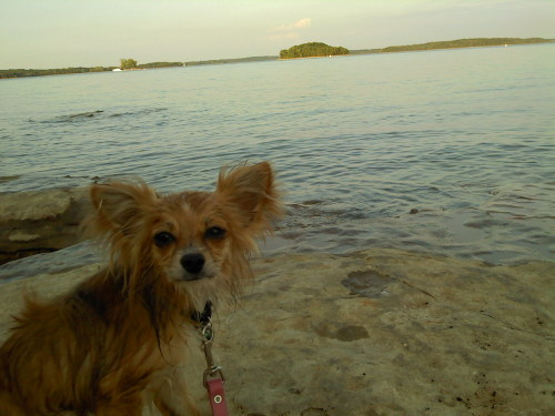 Another picture of Bagel at the lake. He jumped in when we were walking, I guess he got hot!
