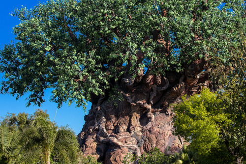 disneyfreak94:  The Tree of Life @ Disney's Animal Kingdom by mutrock on Flickr.