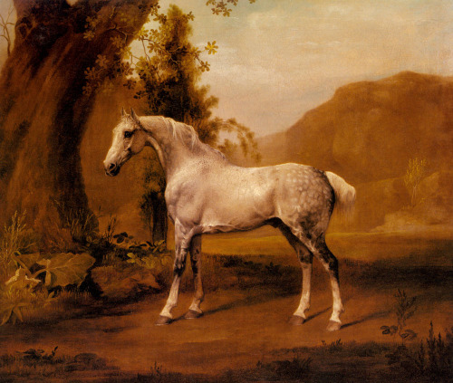 cavetocanvas:  George Stubbs, A Gray Stallion in a Landscape, n.d.