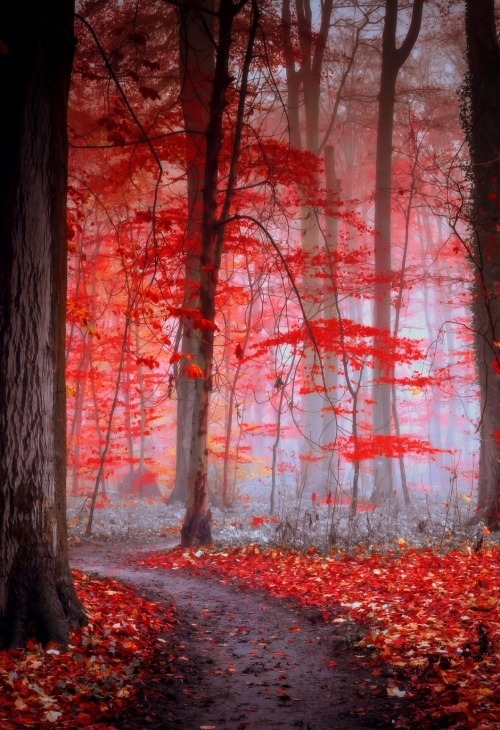 0rient-express:  Following the grey path | by Evelyn Klein Schiphorst.