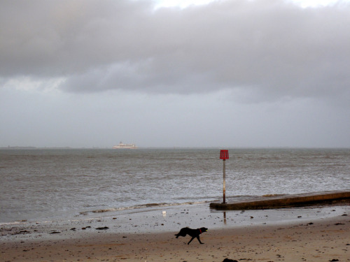 Ryde Beach & Dog (by silverlutra)