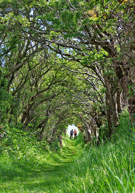 visitheworld:  The path to Ballynoe Stone Circle in Northern Ireland (by stephen nicholas wilson).