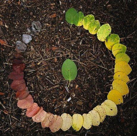 unicorn-meat-is-too-mainstream:  srdash:  Life cycle of a leaf  Well-organized