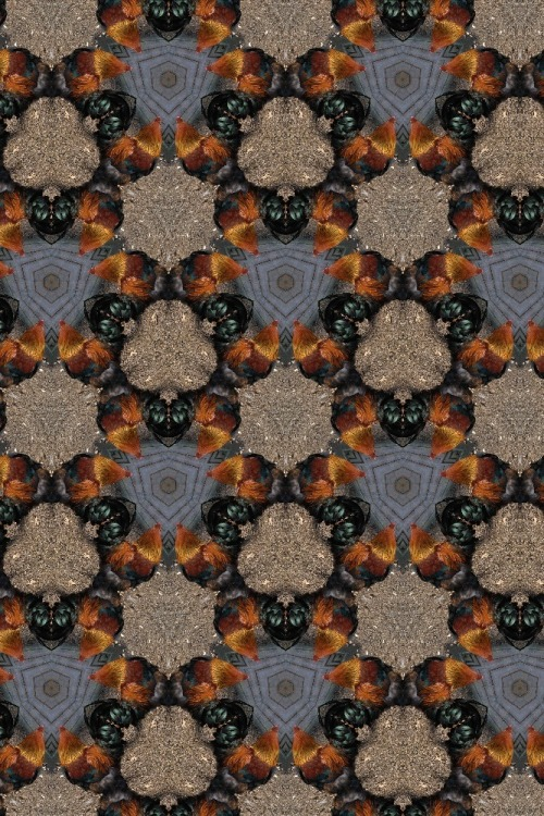 Chicken kaleidoscope