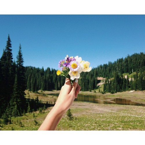 this ones for you, #floralfeast (at Mt Rainier)