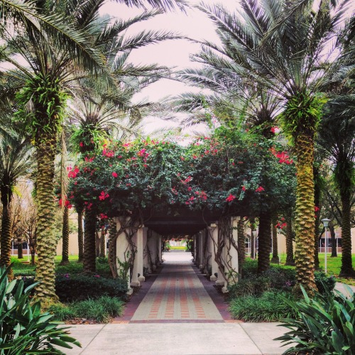 crazyliketherestofus:  This is my favorite spot on campus, so beautiful and peaceful looking.