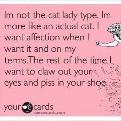 stellamaree:  #mylife #spiritanimal #cat #bitch #catlady #life #ecards #someecards