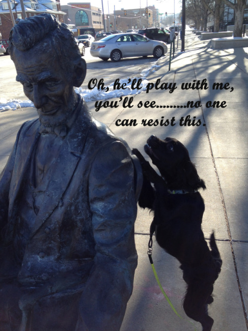 "dogshaming:  Abarkaham Lincoln ignores you""Oh, he'll play with me..you'll see, no one can resist this.""This is Ozzy. He LOVES everyone, and…View Post"