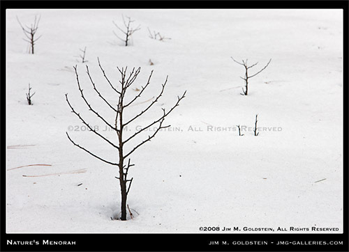 eretzyisrael:  Happy Hannukah: Nature's Menorah  A leafless tree pokes through the snow in Yosemite valley taking on the form of a Menorah.