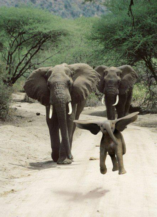 happy lil elephant.