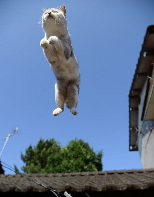 lalulutres:  flying cat…….the horror truly begins when they fly