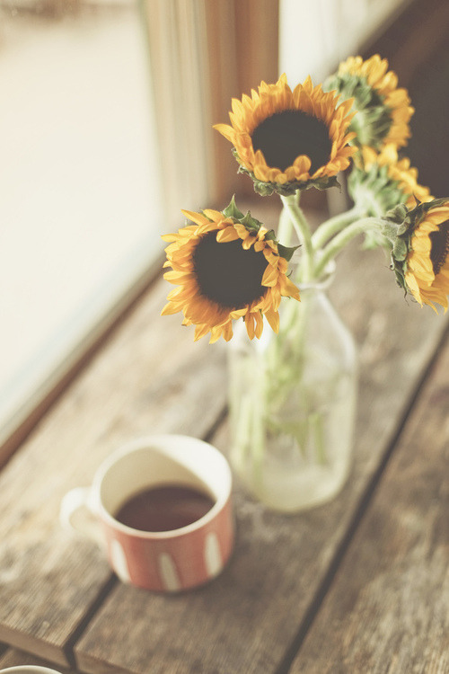 Photography Art Tumblr Beautiful Gorgeous Awesome Vintage Coffee Flower Flowers Field Rain Sun Nature Mug Tea Yellow Floral Spring Flickr Z Lindo Simples Sunflowers L I O N S Girasoles 595 Girasol Encantador Beautiful Grass Veikis